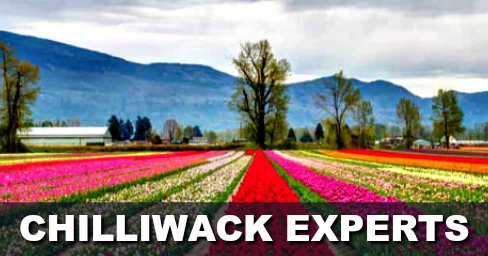 Find Local Chilliwack Experts Near You